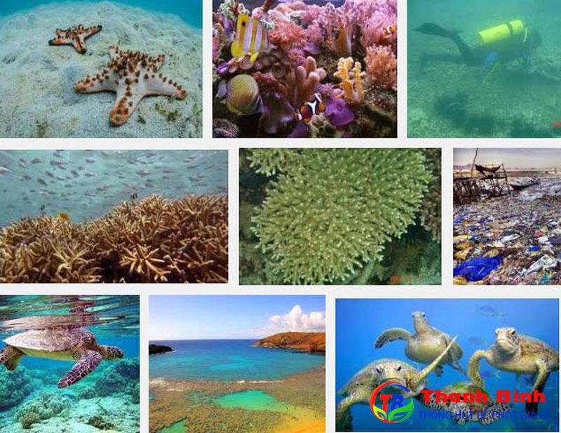 Hậu quả của việc ô nhiễm môi trường biển đe dọa hệ sinh thái