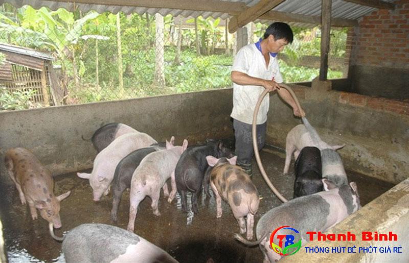 Tổng quan về nước thải chăn nuôi
